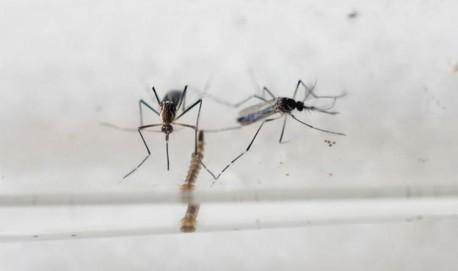 EL SALVADOR-HEALTH-ZIKA-VIRUS