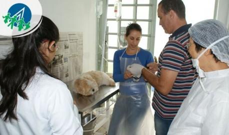 veterinario-aprendiz