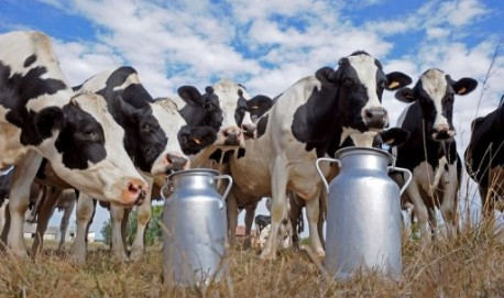 gado_leite