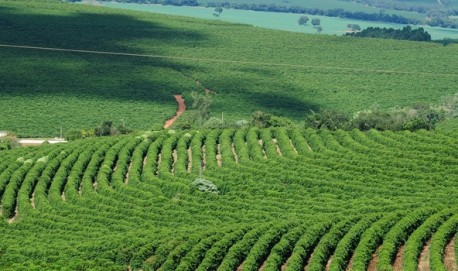 Circuito divulga as tecnologias do setor do café e promove a troca de informações (Foto: Divulgação Emater)