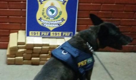 Cães farejadores tem ajudado no trabalho da PRF em nossa região (Foto: Divulgação)