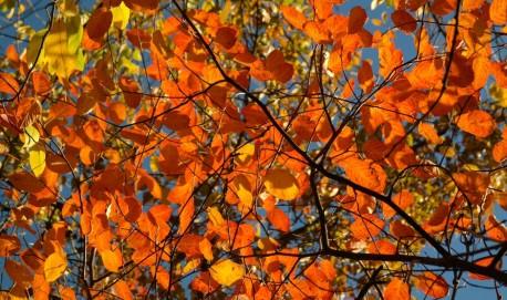 O outono vai até o dia 21 de Junho